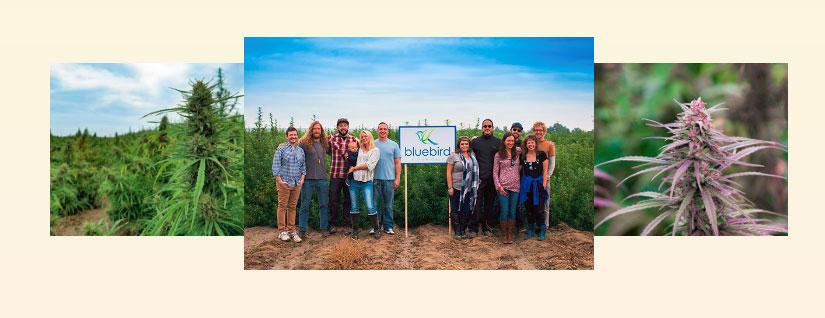Bluebird Botanicals team