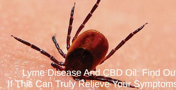 tick giving someone lyme disease